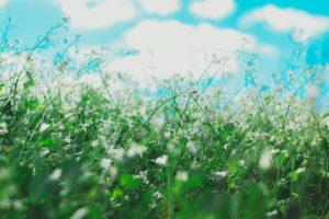 Seasonal Allergies Amid a Pandemic